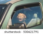 Dog In Drivers Seat Of Green...