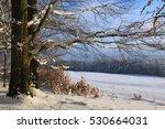 Winter Landscape  Praha  Czech...