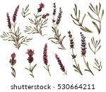 french lavender watercolor set. ... | Shutterstock . vector #530664211
