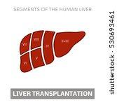 liver transplantation concept ... | Shutterstock .eps vector #530693461