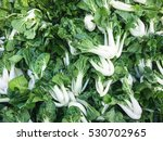 group of organic bok choy on... | Shutterstock . vector #530702965