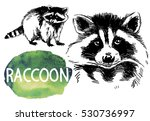 raccoons. drawing by hand in... | Shutterstock .eps vector #530736997