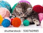 Stock photo little kitten on white background striped kitten 530760985