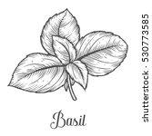 basil fresh herb leaves plant... | Shutterstock . vector #530773585