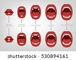 baby first teeth chart. vector... | Shutterstock .eps vector #530894161