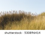 Long Grass Under Blue Sky