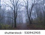 magical foggy seasonal forest... | Shutterstock . vector #530942905