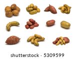 large page assortment potatoes... | Shutterstock . vector #5309599