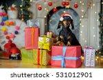small lovely doggie  in santa... | Shutterstock . vector #531012901