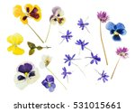 Stock photo summer flowers isolated 531015661