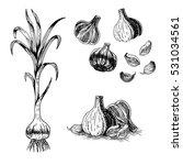 hand drawn set of garlic. retro ... | Shutterstock .eps vector #531034561