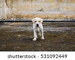 Stock photo labrador puppy 531092449