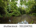 water plants  swamps  ponds and ...   Shutterstock . vector #531104701