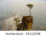 Tree Growing On A Rock...