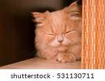 Stock photo ginger cat face sleeping or purring indoor with copy text space 531130711
