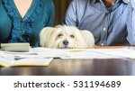 family bankrupt. unhappy dog is ...   Shutterstock . vector #531194689