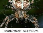 european garden spider or cross ...   Shutterstock . vector #531243091