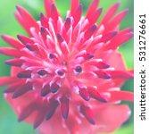 Small photo of background nature Flower Aechmea fasciata Pink