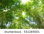 bamboo forest background | Shutterstock . vector #531285001
