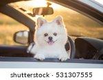 Beautiful Pomeranian Dog. Cute...