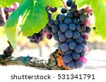 Bunch Of Red Wine Grapes In...