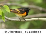 Small photo of Male American redstart