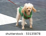 Stock photo puppy on a street 53135878