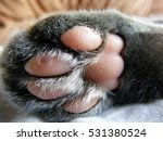 Stock photo cat s paw 531380524