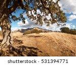 Oak Tree  Yellow  Dry Hills ...