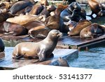 sea lions near pier 39 in san...
