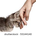 Stock photo kitten on a white background 53144140