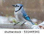 Blue Jay Sitting On A Bird Bat...