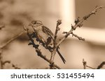 sparrow perched on a passeridae ... | Shutterstock . vector #531455494