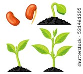 plant growth stages from seed... | Shutterstock .eps vector #531461305