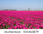 Magenta Flower Field With...