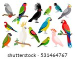 tropical parrot set with... | Shutterstock .eps vector #531464767