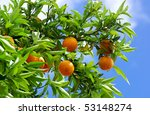 Oranges and blue sky. - stock photo