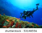 Coral Reef  Tropical Fish And...