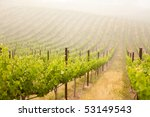 beautiful lush grape vineyard... | Shutterstock . vector #53149543