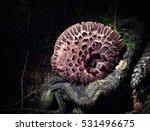 Small photo of background Sarcodon imbricatus adherent fungus on stump