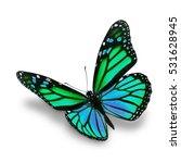 beautiful green monarch... | Shutterstock . vector #531628945