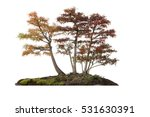 Grove Of Autumn Trees  Isolated