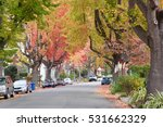Small photo of Tall Liquid ambar, commonly called sweetgum tree, or American Sweet gum tree, lining an older neighborhood in Northern California. Christmas decorations on old fashion light posts lining the street