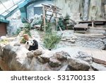 the chinese panda in the... | Shutterstock . vector #531700135