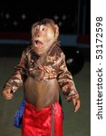 Circus Chimpanzee Monkey In A...