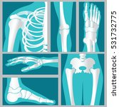 set of xray of human  emblem or ... | Shutterstock .eps vector #531732775