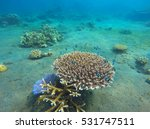 underwater landscape with coral ... | Shutterstock . vector #531747511