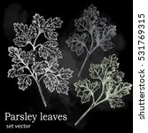 parsley leaves. drawing made... | Shutterstock .eps vector #531769315