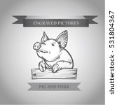Sketch Of Pig. Pork.engraved...