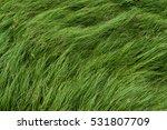 Cocograss  Close Up Beautiful...
